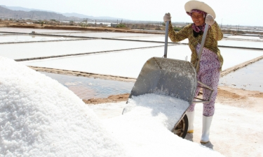 Vietnam to enhance domestic salt production and curb import