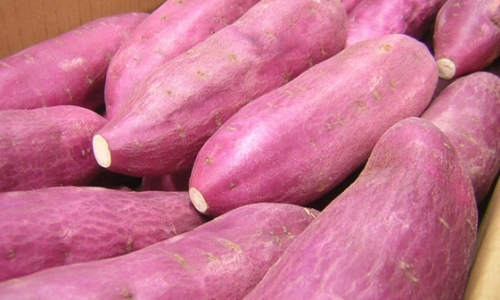 The price of Vietnamese sweet potatoes is three times higher than that of Chinese sweet potatoes