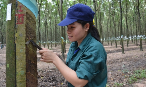 Vietnam rubber increases market share in China
