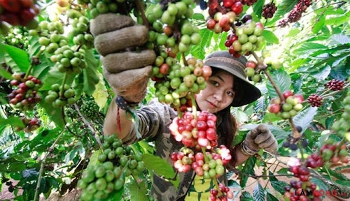 Vietnam to increase domestic coffee consumption
