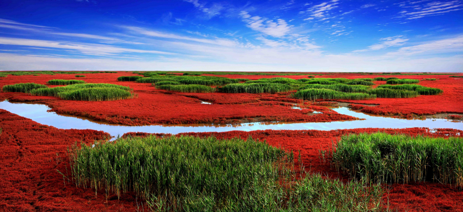 Panjin-Red-Beach-Pictures