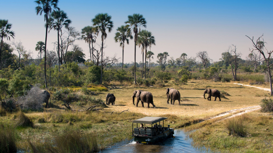Herd-of-Elephants-walking-while-guests-cross-channel-on-a-Safari-Game-Drive-in-Botswana
