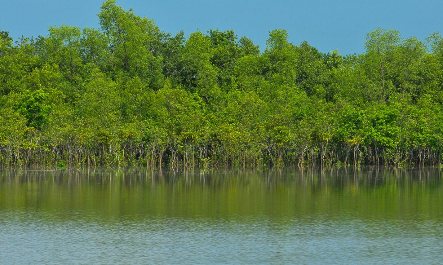 sundarbans_flickr-1000x600