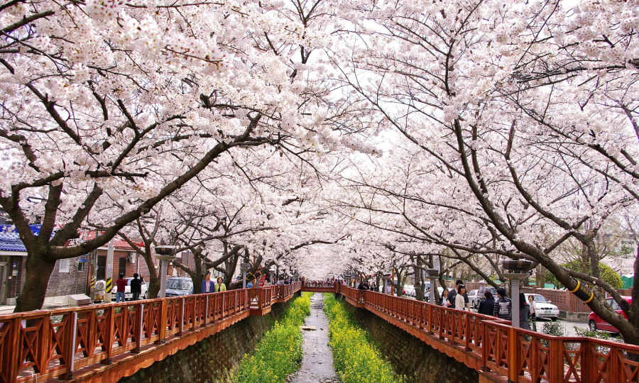 Spring-in-South-Korea
