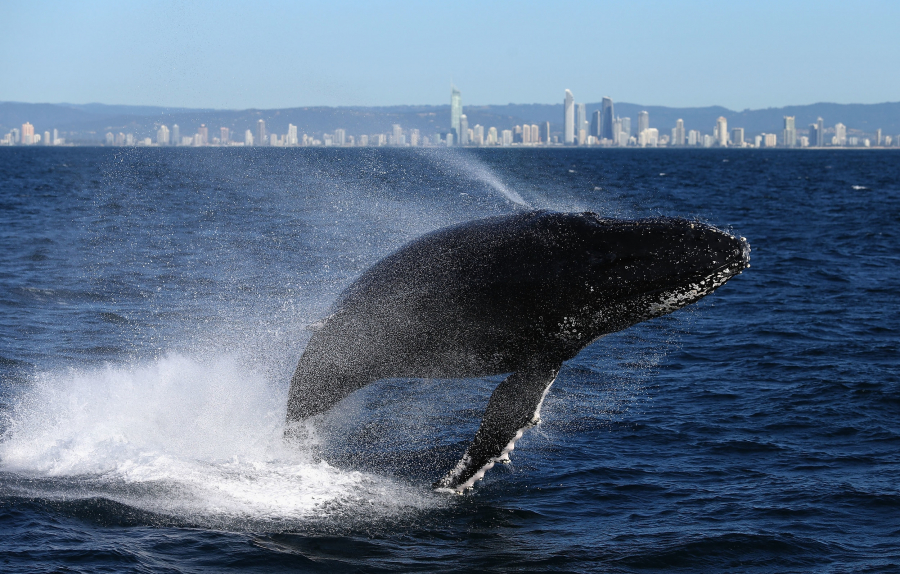 Whale-Watching (1)